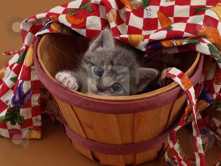 Bushel of Kitty stock photo, A small grey kitten playing hide and seek in a bushel basket. by Robert Gebbie