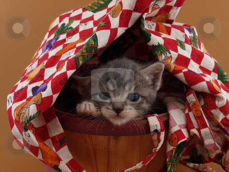 Sleepy Kitty stock photo, A small grey kitten looks tired as she peeks out from a covered basket. by Robert Gebbie