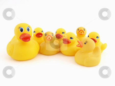 Mother and Chicks stock photo, A Yellow Rubber Duck mother and her chicks isolated on a white background by Robert Gebbie