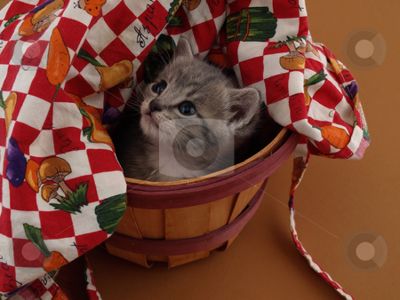 Grey Kitty stock photo, A small grey and white kitten looks upward while sitting in a basket. by Robert Gebbie