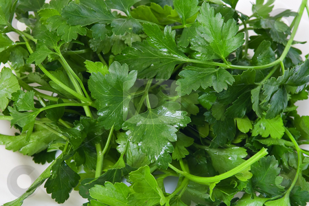 Fresh parsley stock photo, Closeup of fresh green parsley in a white dish by ANTONIO SCARPI