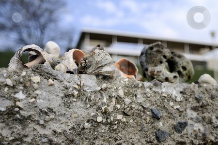 Rocks and seashells stock photo, Close-up with rocks and seashells resting near the sea by Dragos Iliescu
