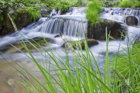 Forest river waterfall in the portuguese primorye reserve stock photo, Forest river waterfall in the portuguese primorye reserve by Cristovao Oliveira