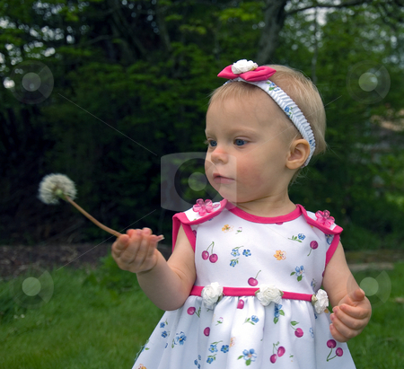 1 Year Old Girl with Dandelion stock photo, This cute little 1 year old girl is looking at a dandellion seed head she's never seen before. by Valerie Garner