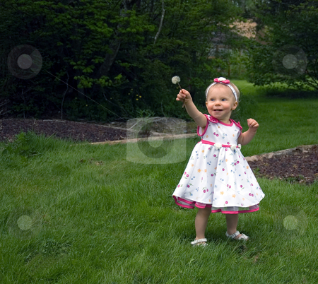 Cute Toddler Girl with Dandelion Seed stock photo, This cute little toddler in a white flowered dress is looking at her first dandelion seed head thinking it some great new toy. by Valerie Garner
