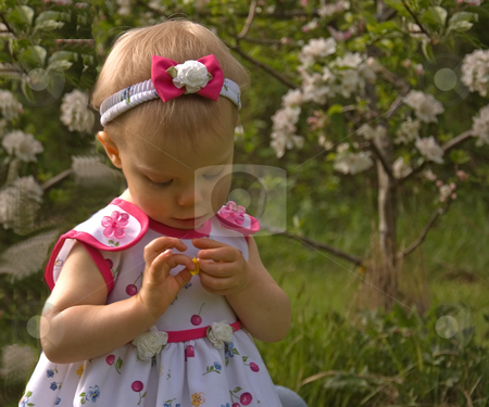 Adorable Little Girl Looking at Flower stock photo, This adorable little girl toddler is closely looking at a small flower in a darling candid pose. by Valerie Garner