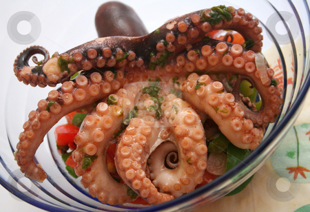 An octopus stock photo, An octopus by Yvonne Bogdanski