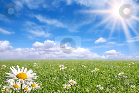 Happy  Bright Spring Day Outside stock photo, Green Grass, Blue Sky, and Daisy Landscape by Katrina Brown