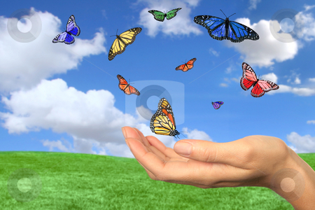 Pretty Butterflies Flying Free stock photo, Butterflies Flying Free Against a Beautiful Spring Landscape by Katrina Brown