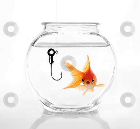 Do Not Take The Bait stock photo, Gold Fish Realizing a Hazardous Situation. Concept of Not Being Lured by Katrina Brown