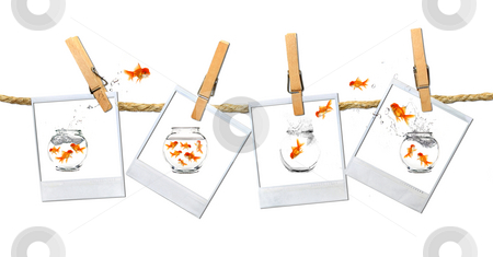 Humous Image of Goldfish Jumping Around stock photo, Old FIlm Frames With Funny Goldfish Escaping by Katrina Brown