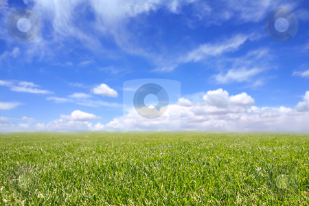 Beautiful Field of Green Grass and Blue Cloudy Sky stock photo, Beautiful Field of Green Grass and Blue Cloudy Sky. Front of Grass is in Focus With Intentional Extreme Depth of Field by Katrina Brown