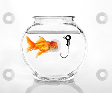 Phishing for Information stock photo, Hook in a Fish Bowl Concept of Being Taken Advantage Of by Katrina Brown