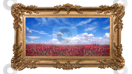 Framed Field of Pretty Red Flowers and Beautiful Sky stock photo, Field of Pretty Red Flowers and Beautiful Sky With High Depth of Field in a Golden Frame by Katrina Brown