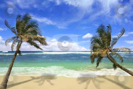 Island Pardise Beach in Hawaii stock photo, Sandy White Beach with Stunning Turquoise Waters and Palm Trees in Hawaii by Katrina Brown