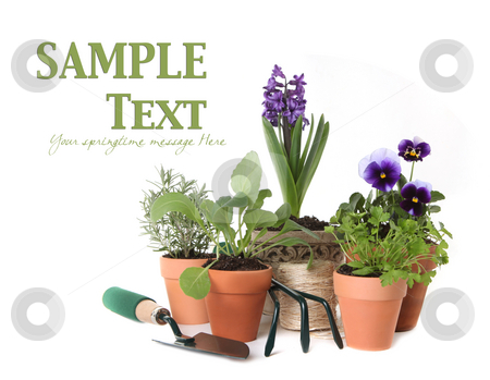 Happy Spring Time Herb Gardening on White Background stock photo, Happy Spring Time Herb Gardening on White Background With Copy Space for Your Text by Katrina Brown