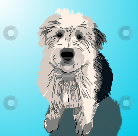 Sheepdog Puppy Sitting stock photo, A sheepdog puppy sitting on a blue background with a drop shadow. by Karen Carter