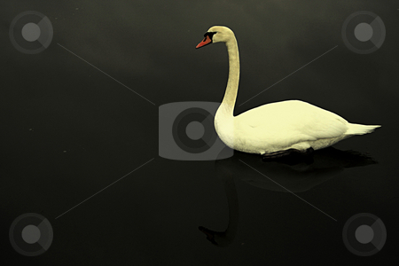 Jesus stock photo, Pay attention, it's not swimming but sitting on ice by Andrei Prakharevich