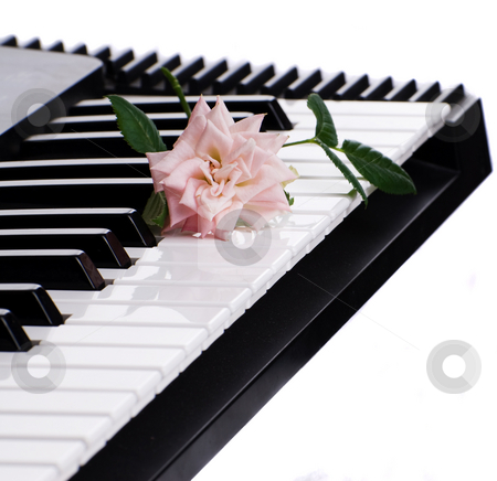 Rose On Piano stock photo, A rose resting on an electronic piano, isolated against a white background by Richard Nelson