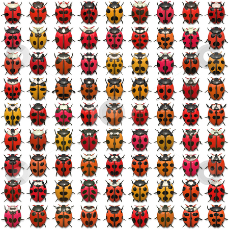 Ladybugs Pattern stock photo, A sheet of ladybug illustrations that tile seamlessly as a pattern.  Isolated over white. by Todd Arena