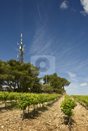 Hill top vineyard stock photo, A vineyard on top of a hill, with a radio and Cell phone transmitter station by Corepics VOF
