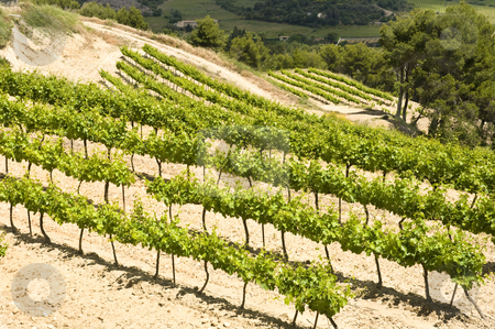 Terraced vineyards stock photo, Various vine grape plantations on terraces in the Provence, France by Corepics VOF