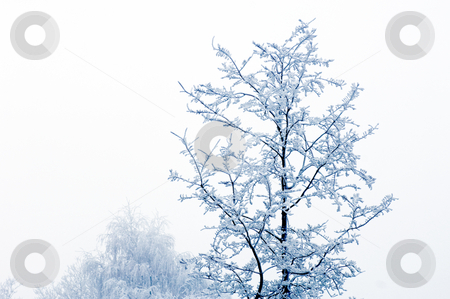 Hoarfrost stock photo, Hoarfrost covered trees on a misty day by Corepics VOF