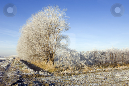 Winter Orchard stock photo, An apple orchard during wintertime by Corepics VOF