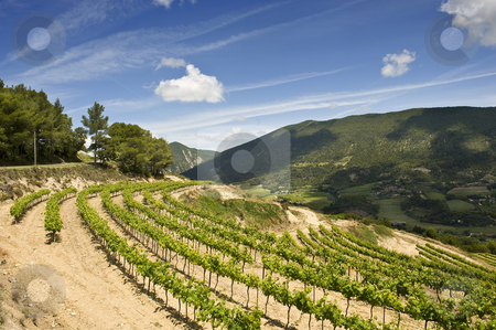 French Vineyards stock photo, Vineyards in the Drome, France by Corepics VOF