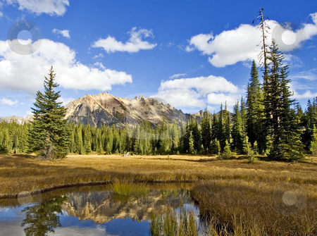 Washington Pass stock photo, The wilderness marshes in Washington Pass, North Cascades national park by Corepics VOF
