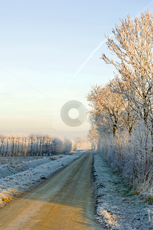 Winter landscape stock photo, Hoarfrost covered trees surrounding the rural orchards on a beautiful winter morning. A small hare crossing the road, heading towards the sunlight. by Corepics VOF