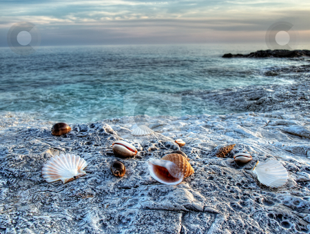 Adriatic sea 2 stock photo, Adriatic shells on rocky Adriatic coast by Sinisa Botas
