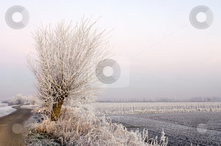 Rural winter scene stock photo, The frosted trees and bushes along a country road in Zeeland, the Netherlands, partially lit by the highbeams of a car. Early morning. by Corepics VOF