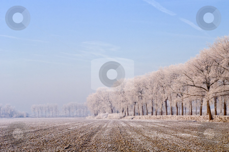 Rural winter in Zeeland, the Netherlands stock photo, An almost archetypal image of Zeeland, the Netherlands: a freshly ploughed field in the polder, surrounded by dykes and trees, covered in frost and a faint haze on a cold winter morning by Corepics VOF