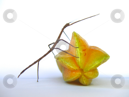 Stick and Star PUSH stock photo, Stick insect pushing a starfruit by Jose .