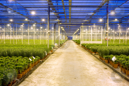 Horticulture transport lane stock photo, A wide, concrete, transport lane through the various compartments in  a huge glasshouse, with lilies by Corepics VOF