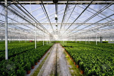 Glasshouse stock photo, The endless rows of potted plants in a huge glasshouse by Corepics VOF