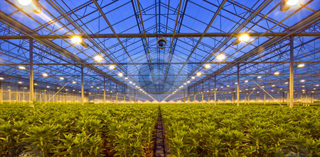 Glasshouse at dusk stock photo, A glasshouse, growing lilies, at dusk, with an intricate and complex environmental control system by Corepics VOF