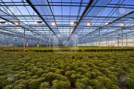 Horticulture stock photo, Drapes being pulled to shield the light and insulate a huge glasshouse by Corepics VOF