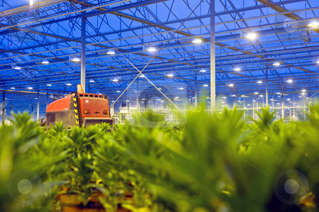 Glasshouse vehicle stock photo, A vehicle used for transportation through a glasshouse with out of focus lilies in the foreground by Corepics VOF