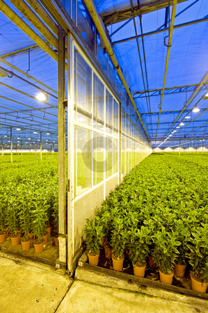 Glasshouse Sliding Door stock photo, The sliding door inside a glasshouse, separating two different sections of a lily horticulture company by Corepics VOF