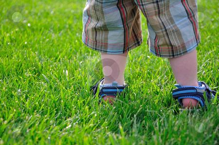 Little Boy's Legs in Green Grass stock photo, A little boy stands outside in the green grass. by Ben O'Neal