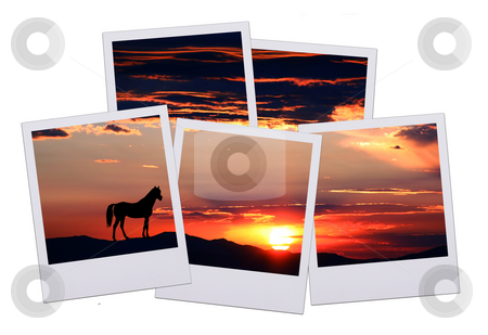 Five pictures of horizon stock photo, Five pictures of a beautiful horizon with horse isolated on white background by Stacy Barnett