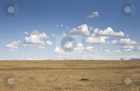Savannah stock photo, Savannah and cloudscape, Masai Mara, Republic of Kenya, Eastern Africa by mdphot