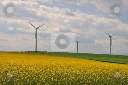 Field with rape and wind generator  stock photo,  by Zheko Zhekov
