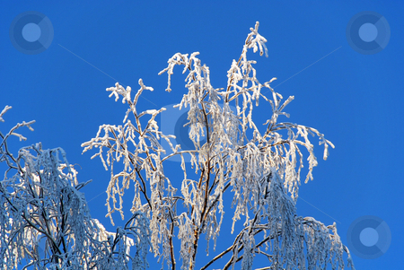 Frosted tree branches stock photo, Detail from winter landscape with frosted tree branches by Gjermund Alsos