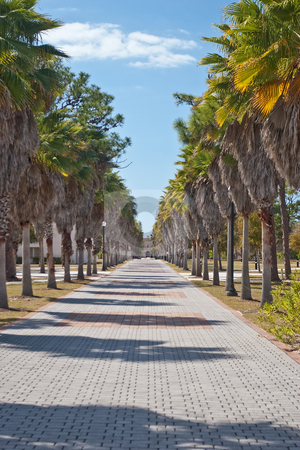 Palm Tree Lined Walkway stock photo, Brick sidewalk lined with palm trees on the campus of New College of Florida, with the Charles Ringling mansion in the background. by Steve Carroll