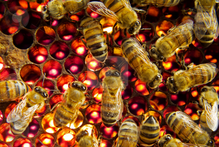 Bees inside  beehive stock photo, Bees inside a beehive by Noam Armonn