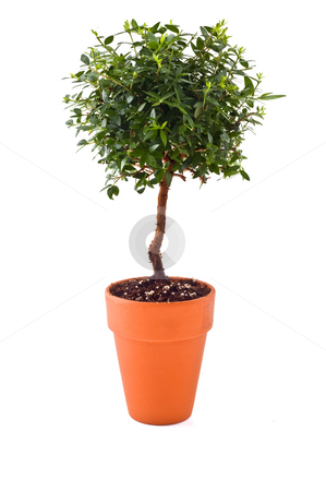 Small tree stock photo, Small tree in a