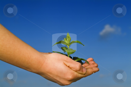 Child hands holding plant stock photo, Child hands holding plant against clear blue sky by Noam Armonn